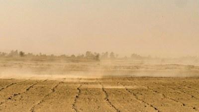 Dürre, Artensterben ... Umweltschutz braucht Gesellschaftsveränderung