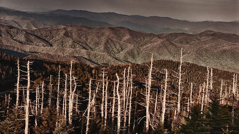 Die immer massiver fortschreitende Vernichtung der Wälder